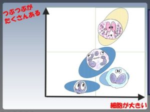 白血球分画001-2